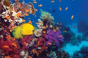 coral reef protection