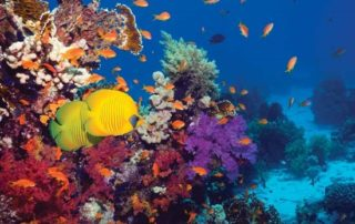 Byrd Campbell Law Coral Reef